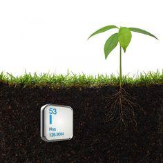 O picătură de iod și nu-ți vei recunoaște grădina! Acesta este un remediu împotriva fitoftorozei, mucegaiului alb și dăunătorilor. - Fasingur How To Dry Basil, Herbs, Exterior, Gardening, Home, Agriculture, Plant, Lawn And Garden, Herb