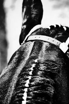 Western show horse, ready for action