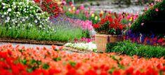 Man Made Garden Wallpaper Most Beautiful Gardens, Beautiful Flowers Garden, Flowers Nature, Amazing Flowers, Amazing Gardens, Hd Flowers, Flower Colors, Spring Flowers, Rose Day Wallpaper