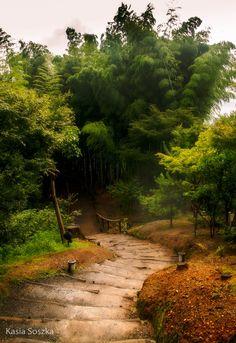 Bamboo forest in Kodaiji Temple