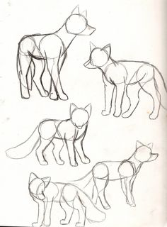 fox sketches                                                                                                                                                                                 More