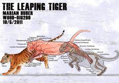 • cat drawing art cats draw lion tiger feline felines Anatomy leopard Big Cat cheetah lions big cats tigers reference tutorial leopards cheetahs references fucktonofanatomyreferences •