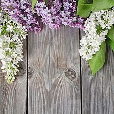 Beautiful Lilac On Wooden Surface Stock Photo (Edit Now) 81186103 Flower Background Wallpaper, Wood Wallpaper, Wood Background, Flower Backgrounds, Wallpaper Backgrounds, Wallpaper Murals, Floral Backdrop, Wedding Background, Backdrop Wedding