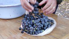 Cum se face vinul de casă Fruit Trees, Grape Vines, Blueberry, Gardening, Food, Youtube, Home, Berry, Vineyard Vines