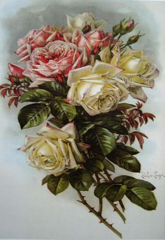 Print FREE SHIP French Cabbage Roses by VictorianRosePrints, $11.99