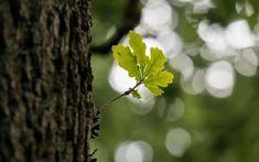 Bezová mast - Bylinky pro radost Deep Meditation, Meditation Music, Poetry Online, Tree Stem, Out Of The Dark, Forest Bathing, Fairy Tree, Leaf Images, Spring Tree
