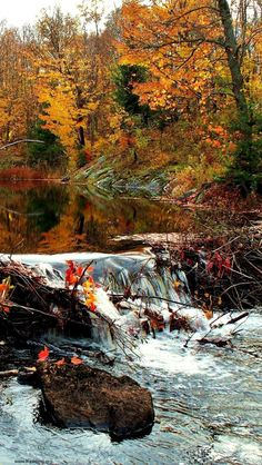 Beaver Dam in Autumn, Whitestone, ON, Canada