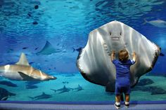 Little boy and a manta ray bonding together...beautiful!