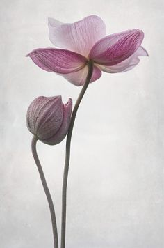 A little touch by Funchye, via Flickr