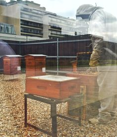 Just some random beekeeping at the foot of  Montparnasse Tower!