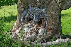 Owl simulacrum on tree. Image found at blogorganon blog.