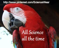 Looking for great Science for your classroom? Check out these boards.