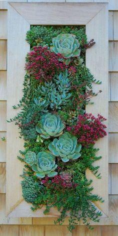 Succulents vertical garden