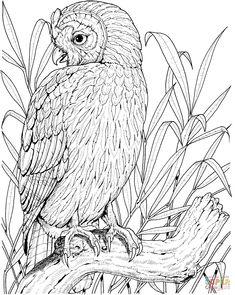 Perched Owl | Super Coloring