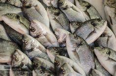 Fish texture by tarikjesenkovic - Pinned by Mak Khalaf