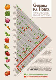 Plantas companheiras – tabela para horta caseira e calendário de plantio