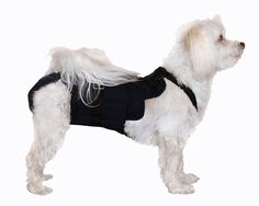 Dog Diaper Wrap SMALL BLACK ^^ Trust me, this is great! Click the image. : Stuff for dog
