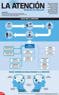 Atención: qué es y cómo funciona #infografia #infographic #psychology                                                                                                                                                                                 Más