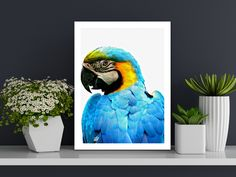 Create a work of art on canvas with brilliant colour vibrance and a unique texture. Vibrant colours thanks to our 12 colour printing process, 340gsm Premium Polycotton Canvas, perfect for any style of photography, handmade with passion 💪❣️