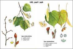 Scenariusz 1 Landscape Architecture, Montessori, Diy And Crafts, Plant Leaves, Plants, Plant, Planting, Planets, Landscape Design