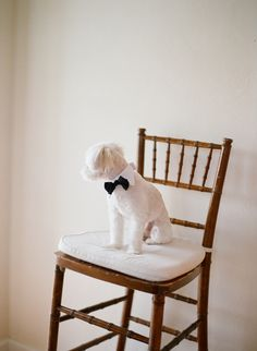 Photography by Elizabeth Messina / elizabethmessina, Event Planning by VP Events, Inc. / vpevents.com, Floral Design by Dolce Designs / dolcedesignsstudio.com/ #wedding #puppy escort