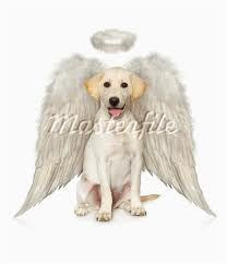 dog with angel wings | Hey… It's Jet Here