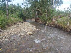 Buli, Halmahera Timur, Maluku Utara