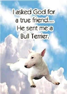 """Saying about a Bull Terrier: """"I asked God for a true friend... He sent me a Bull Terrier."""""""