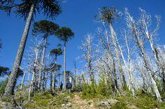 Por primera vez nuestro país sobrepasa sus límites ecológicos para un año, haciendo necesarios 1.1 Chiles para cubrir el consumo y demanda actual, según datos del WWF.