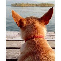 Şiva gölü seyrediyor #Şiva #iznikgölü #manzara #peyzaj #küçükdostum #kızım #Nicea #animal