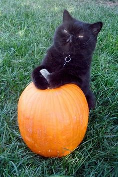 This is my pumpkin!