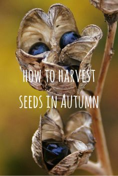 Harvesting seeds is a great way to get lots of new plants for free, and it's easier than you think. Here are lots of tips on how to give it a try.