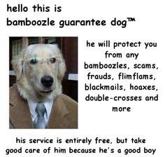 Hes the hero this community needs 🐕 🐕 🐕 🐕 aj ajpw animaljam animaljamtrades animaljamplaywild meme funny dogs animaljamart game games Dog Memes, Dankest Memes, Funny Memes, Hilarious, Jokes, Funny Tweets, Bamboozled Again, Funny Animals, Cute Animals
