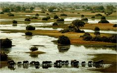 Okavango Delta Botswana | Botswana-OkavangoDelta