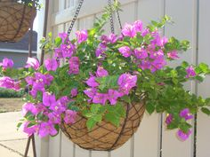 Great new hanging wire birds nest  baskets for my bougainvilleas.  They always do great back by the alley.