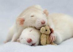 two sweet mice sleeping with a tiny teddy bear