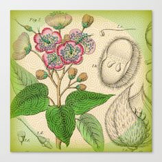 Botanical with Pattern Canvas