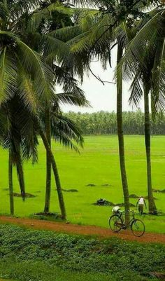 Village Photography, Nature Photography, Incredible India, Amazing Nature, Kerala Backwaters, Nature Hd, The Lost World, India Travel, Nature Pictures