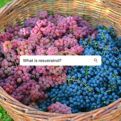 What is resveratrol? 🍇 Resveratrol is a compound that is found in red wine🍷 that comes from grapes and gives wine its heart health benefits. This antioxidant-like health booster found in the skins of grapes, berries, and peanuts can also protect the brain 🧠from cognitive decline. Combining resveratrol and curcumin turns the duo into an anti-inflammatory powerhouse supplement blend. 🧡💜