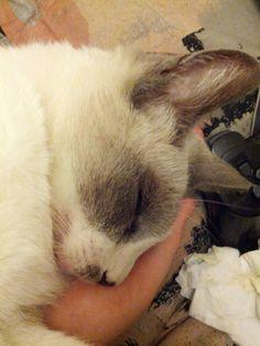 My cat, Buddy, sleeping on my hand. cute cat