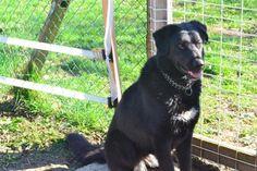 Lola SUPER CHIENNE DE FAMILLE DE 3 ANS, très affectueuse, très proche de l humain, s entends avec ses congénères mais préfèrerait être le seul chien de la famille Liberté sans frontière (Isère)