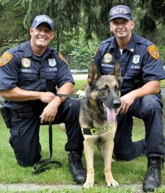 10 Real Life Crime-Solving Canines | pawnation.com