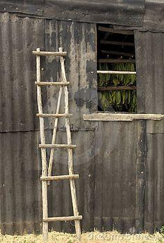 Rustic Ladder by Dlrz4114, via Dreamstime