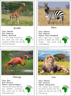 Montessori Animals of Africa 3 Part Cards with. by Pinay Homeschooler Shop Animal Fact File, Animal Facts For Kids, Cute Wild Animals, Jungle Animals, Montessori Materials, Montessori Activities, Zoo Preschool, Kindergarten, Learning Websites For Kids