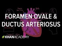 Foramen Ovale and Ductus Arteriosus - YouTube