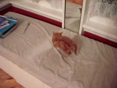 Watch a very cute kitten freaks himself out in front of the mirror. By the way, the kitten landed on his feet and is fine. :)
