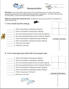 Worksheets Monohybrid Crosses Worksheet Answers the beginning squares and factors on pinterest free monohybrid genetics practice problem worksheet