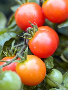 Cherry Tomatoes, even better for you than regular sized tomatoes - the skin is rich in lycopene, a phytonutrient that stops the buildup of inflammatory compounds linked to depression.  So, cherry tomatoes = more skin = more lycopene = good mood. - RH