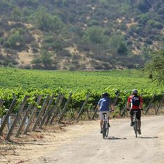 Adventure trails of bike and wine in Livermore Valley, CA