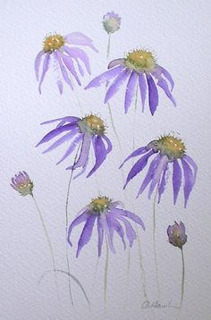 Watercolour painting PURPLE ECHINACEA original art by artist Amanda Hawkins 17 x unframed unmounted. Cone flowers, floral botanical art in 2019 Watercolor Pictures, Easy Watercolor, Watercolor Cards, Floral Watercolor, Watercolour Pencil Art, Watercolor Flowers Tutorial, Watercolour Paintings, Watercolor Techniques, Botanical Art